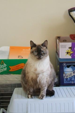 Cat toilet (Flickr)