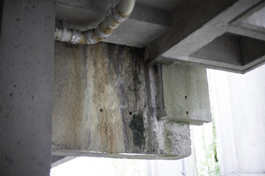 Mould is a rampant issue at SFU, but hopefully not for much longer.