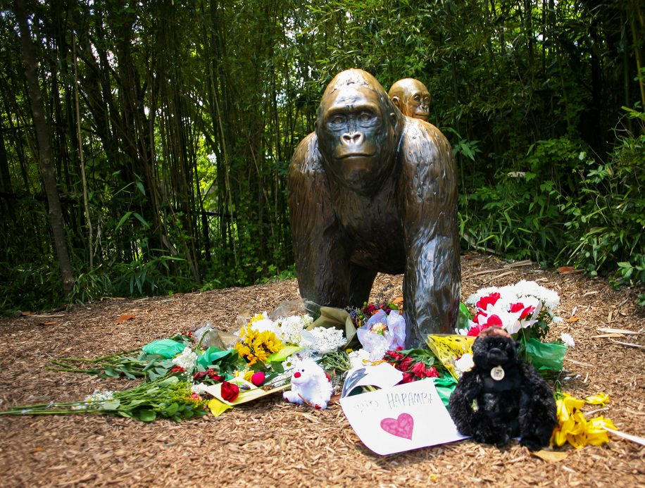 The site of Harambe's memorial, where mourners left flowers and other tributes.