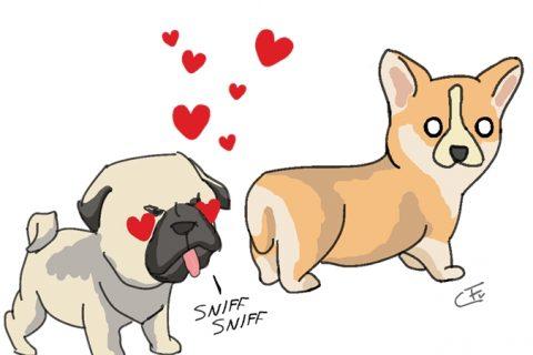 CoraFu - Dog Love